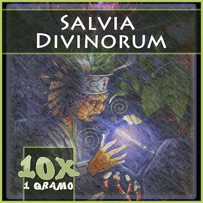 Salvia divinorum en Mexico 10x