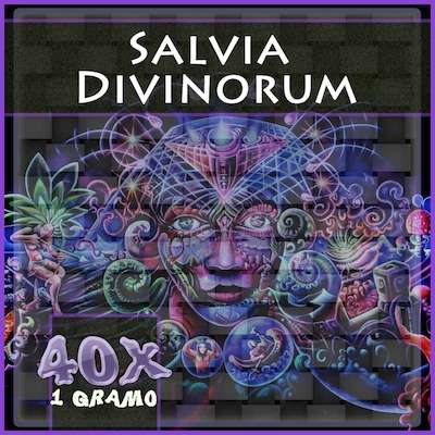 Salvia divinorum en Mexico 40x