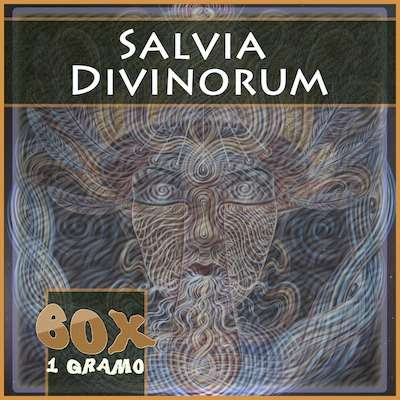 Salvia divinorum en Mexico 60x